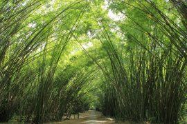 bamboocatherdral